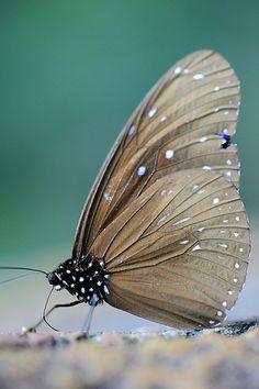 """""""A borboleta conta momentos e não meses, e tem tempo de sobra."""" (Rabindranath Tagore)"""