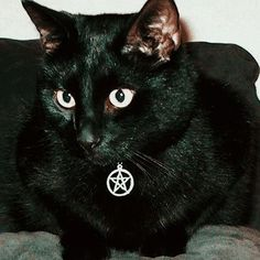 if i dont get a black cat im gonna scream Archie Comics, Yennefer Of Vengerberg, Amor Animal, Witch Aesthetic, Black Cat Aesthetic, Slytherin, Occult, Witchcraft, Cute Cats