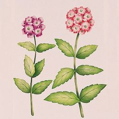 Paint a wall mural with realistic stenciled flowers with wall art stencils - Royal Design Studio