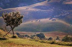 7 zile în Toscana – mai mult decât simplă o călătorie – The True Treasures Toscana, Flocking, Mai, Sheep, Travel Photography, Leaves, Italy, Mountains, Nature