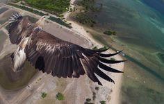 Drone tira fotografia a uma águia Fotoblog: As Melhores Fotos da Internet ...para quem respira fotografia!