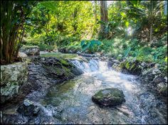 Logement entier à Roaring River Jamaica (Jamaïque). Guests should be aware that our internet is weak and erratic ,due to our location, and cannot be counted upon for serious business purposes. Blue Hole, Jamaica, Waterfall, River, Places, Outdoor, Travel, Outdoors, Negril Jamaica