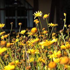 Florecillas que me gusta fotografiar