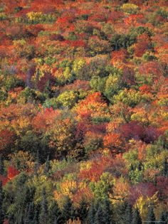 Fall Foliage in New Hampshire's White Mountains