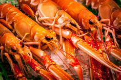 Fresh Lobster Photos Fresh lobster on the market by ChristianTh¨¹r Photography Fresh Lobster, Drink Photo, Lobster Recipes, Food Photo, Food And Drink, Meat, Photos, Pictures, Photography