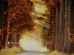 Into the Mist III by Lars van de Goor on 500px