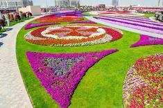 The Dubai miracle garden showcases a wide variety of different flowers that are arranged in different shapes and maintained around the year. Organic Gardening Tips, Organic Plants, Gardening Blogs, Garden Soil, Garden Seeds, Garden Plants, Trees And Shrubs, Trees To Plant, Exotic Flowers