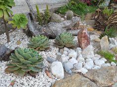 Jardim composto por pedras e plantas suculentas, que exigem pouca água e manutenção