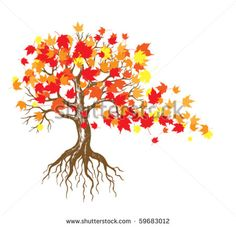 Maple tree branch Stock Photos, Images, & Pictures | Shutterstock