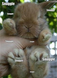 Snuggle snuggle