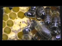 We are supporting new research into viruses linked to varroa » Dean Forest Beekeepers