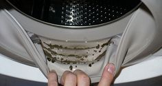 How to Remove Dangerous Mold and Unpleasant Odors from Your Washing Machine with 2 Ingredients If you suddenly start to notice that your clothes get a strange odor after washing, and there are black stains between
