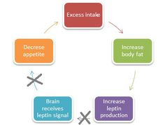 Article on Leptin and leptin resistance