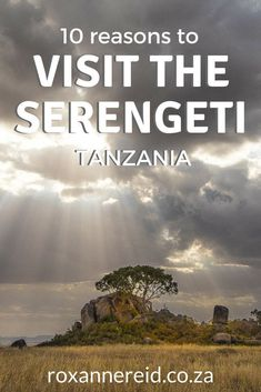 10 reasons to visit the Serengeti National Park in Tanzania, from the wildebeest migration, game drives, hot air ballooning and walking safaris to birding, landscapes, responsible tourism and more. Pin this to your safari board. #safari #wildlife #Serengeti #AfricaTravelTanzania
