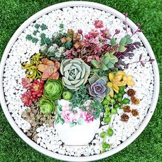 60 Charming Succulent Indoor Garden Ideas 2019 Page 43 of 64 Ideen mit Sukkulenten Succulent Gardening, Succulent Terrarium, Container Gardening, Fairy Gardening, Succulent Bouquet, Indoor Gardening, Succulents In Containers, Cacti And Succulents, Planting Succulents
