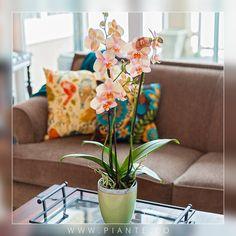 #Mantenimiento Un método de riego alternativo para su #Orquídea es sumergir la maceta en agua tibia una vez a la semana dejándola escurrir bien. Esto simulará la tormenta tropical que tanto les gusta. - http://piante.co/ - #Flores #Premium #Decoración #IdeasDeRegalos #Colombia #OrquídeasDeColombia #ColombianOrchids #Regalos #Regaloscorporativos