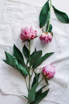 Aiala Hernando · Still Life Photography