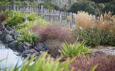 Residential and Public Landscape Design and Landscape Architecture. Landscape Architecture, Landscape Design, Garden Planning, Garden Landscaping, New Zealand, Te Anau, Vineyard, Plants, Outdoor