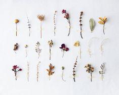 Flora Study N1 - 8x10. Konst Fotografiskt Natural History Skriv ut. Minimal enkel stil. Natural Heminredning. Inomhus trädgårds botaniska