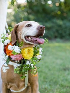 A dog is a couples best friend! http://www.stylemepretty.com/california-weddings/sacramento/2017/02/03/now-this-is-how-you-do-a-barn-wedding/ Photography: Meghan Mehan - https://meghanmehan.com/