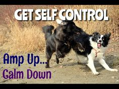 how to train a rambunctious dog