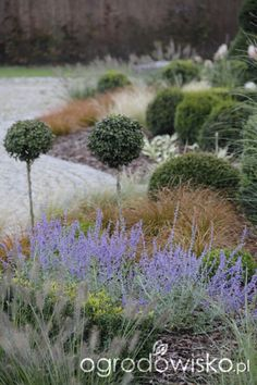 Kompozycje z trawami w roli głównej - strona 16 - Forum ogrodnicze - Ogrodowisko