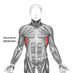 "The reason behind all those pains in the neck and shoulder!!!! Getting to Know Your Serratus Anterior: Strengthen Your ""Wings"" 