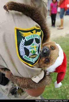 sloth Santa hat