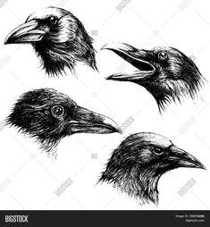 Crow head drawing line work vector