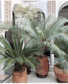 Vast greenery in dreamy spaces via 🌿🌿 Palm Garden, Garden Trees, Tropical Garden, Garden Pots, Rooftop Garden, Mamounia Marrakech, Potted Palms, Potted Trees, Home Design