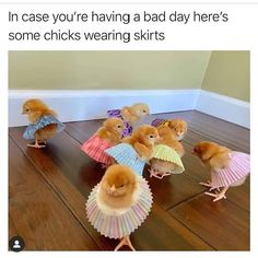 Always makes me happy 😂💀 - Cutest Baby Animals Cute Animal Memes, Animal Jokes, Cute Animal Pictures, Cute Funny Animals, Funny Cute, Cute Dogs, Cute Babies, Funny Pictures, Easter Pictures