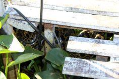 Snake Pantanal Brasil - Foto: CG