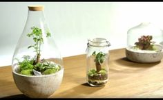 Tutorial to make a Terrarium in a glass jar in 2 minutes - YouT . Terrarium Closed, Terrarium Bowls, Gold Terrarium, Bottle Terrarium, Aquarium Terrarium, Terrarium Centerpiece, Cactus Terrarium, Mini Terrarium, How To Make Terrariums