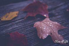 Fall   Flickr - Photo Sharing!
