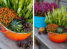 syysistutukset ruukkuihin - Google-haku Succulents, Autumn, Google, Plants, Fall Season, Succulent Plants, Fall, Plant, Planets