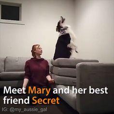 Meet Mary & Her Best Friend Secret - Dogs - Katzen Bilder Funny Animal Videos, Cute Funny Animals, Cute Baby Animals, Funny Cute, Funny Dogs, Animals And Pets, Cute Cats, Dog Videos, Friends In Love