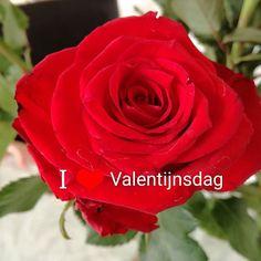 Ik wens iedereen heel veel liefde toe niet alleen vandaag maar altijd en overal.