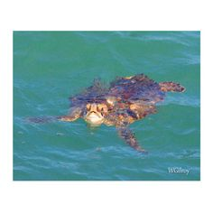 0 Jetty Turtle from wgilroy's Seaside gallery for $20.00 on Square Market