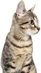"""Képtalálat a következőre: """"cat"""""""