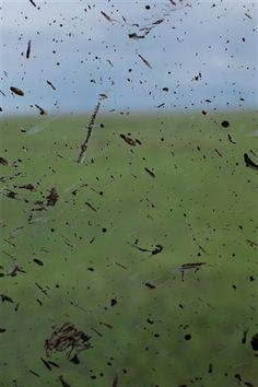 "Wolfgang Tillmans - ""sprinkled landscape"", 2018 inkjet print, framed 43 x x cm Painting On Photographs, Wolfgang Tillman, William Eggleston, Rene Magritte, Parthenon, Types Of Cameras, Abstract Painters, Artist Gallery, Global Art"