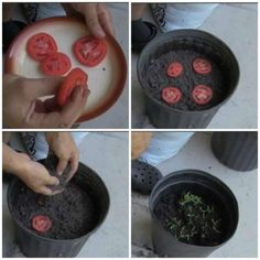 Edible Garden 72185 16 fruits and vegetables to grow INFINITELY from their leftovers - Tips and Tricks - Tips and Crafts