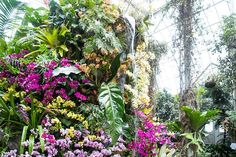 #NYCSpringBloom | The 10 Best Places to See Spring Bloom in NYC Spring has sprung in NYC -- celebrate the season by checking out these fragrant blooms across the city (The Orchid Show 2016 at the New York Botanical Gardens. Photo: Marlon Co for NYBG)