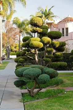 45 Gorgeous Tropiary Trees Ideas For Outdoor And Indoor Garden - Page 18 of 41 Topiary Garden, Topiary Trees, Indoor Garden, Garden Art, Garden Plants, Outdoor Gardens, Amazing Gardens, Beautiful Gardens, Cloud Pruning