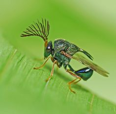 metallic wasp by MD_MC, via Flickr