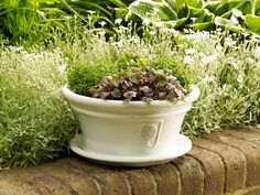 A white glazed terracotta garden bowl planter with matching saucer designed by the Royal Horticultural Society and manufactured by Apta pottery Garden Pots, Garden Ideas, Vintage Planters, Terracotta Pots, Garden Supplies, Container Gardening, Glaze, Garden Design, Planter Pots