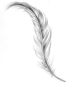 – # , You are in the right place about feather Tattoo hip Here we offer you the most beautiful pictures about the feather Tattoo ankle you are looking for. Feather Drawing, Feather Tattoo Design, Owl Tattoo Design, Feather Art, Feather Tattoos, Tattoo Designs, Small Feather Tattoo, Feather Tattoo Meaning, Mini Tattoos