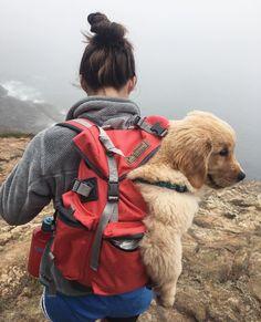 Continental S Rucksack Animals And Pets, Cute Animals, Alaskan Klee Kai, Scottish Fold, Camping, Cute Creatures, Mans Best Friend, Dog Mom, Dog Training