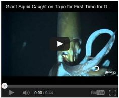 Giant Squid Discovered!! Watch here:  http://gdurl.tk/Gz
