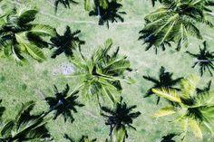 Coconut Plantations  Travel Diaries, Vanuatu | Billabong