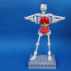 "LEGO: Human Skeleton (6/14) | Previous works ""LEGO: Human Bo… 